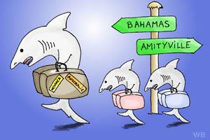 Le requin blanc, routard des mers