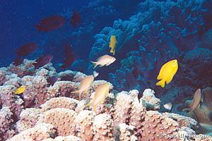 Récifs coralliens des Philippines.