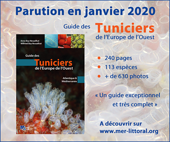 Guide des Tuniciers